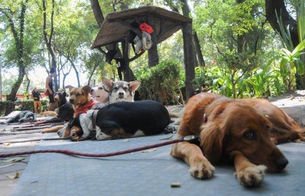Destinan $10 mdp para atencion de mascotas