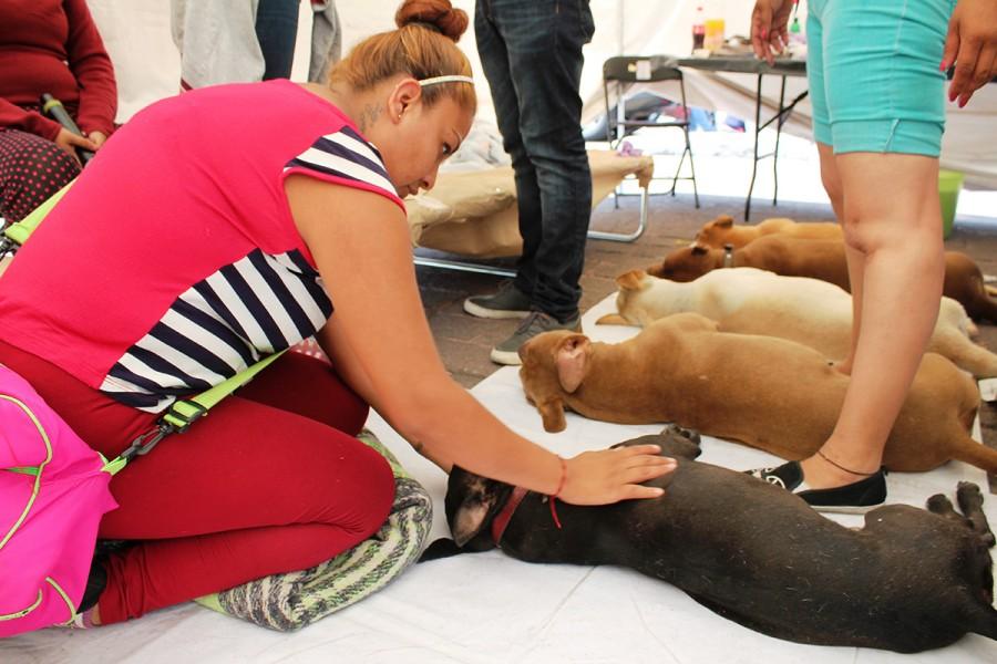 Los iztapalapenses ponen el ejemplo y esterilizan a miles de mascotas
