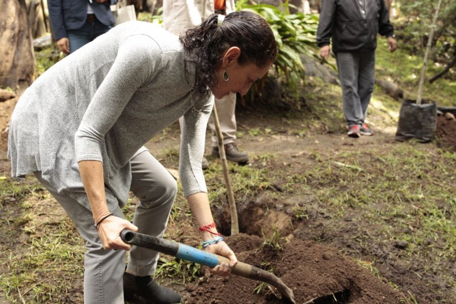 Inician campana de reforestacion en Tlalpan