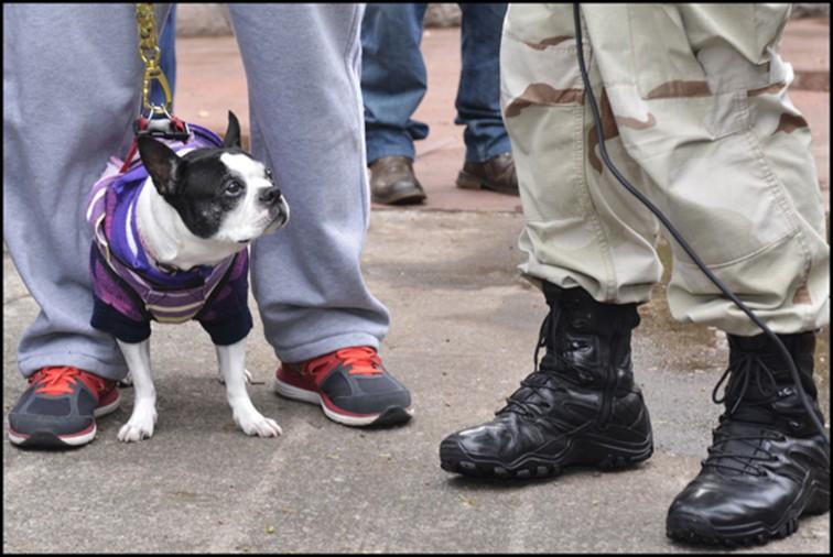Zozobra por muertes caninas en la GAM